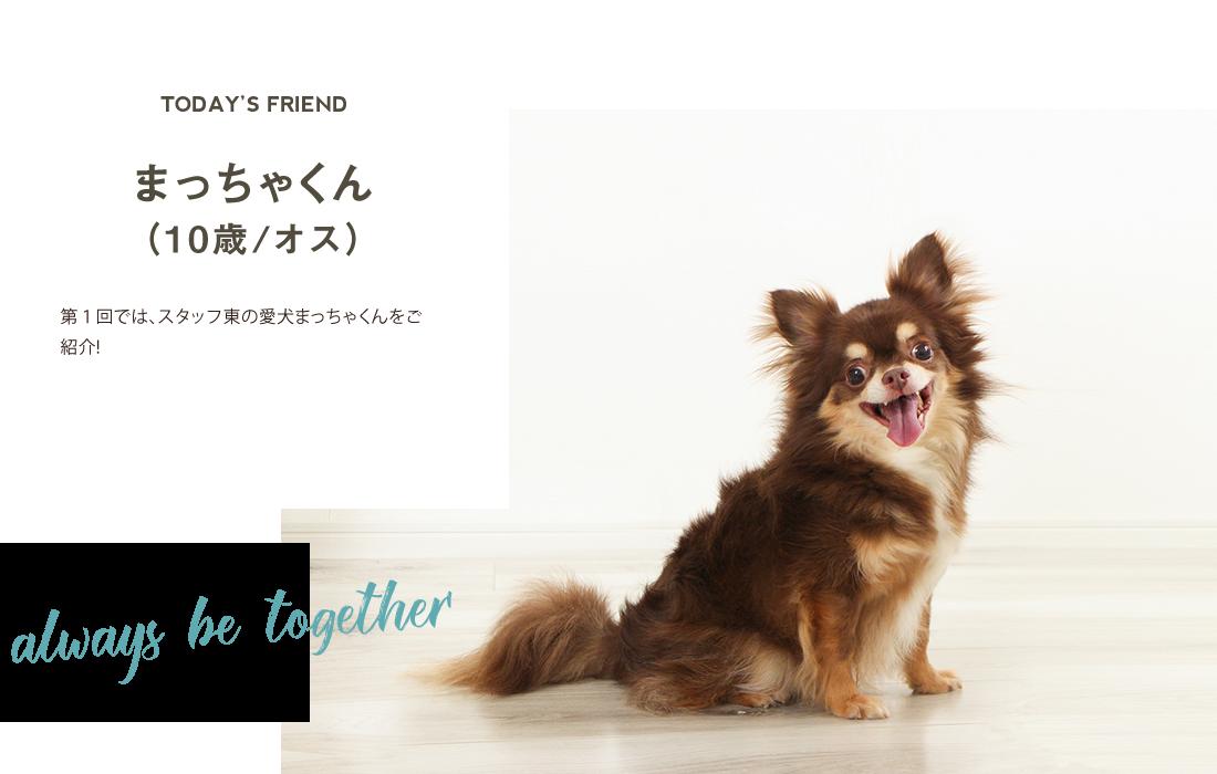 第1回ではスタッフ東の愛犬まっちゃくんをご紹介