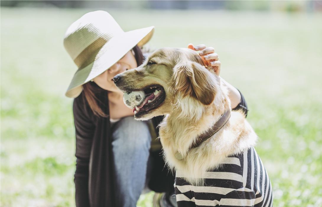 愛犬の腎臓病・結石・肝臓病を生涯、食サポート