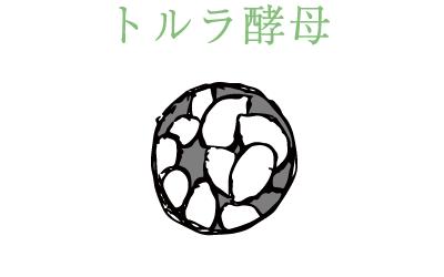 トルラ酵母