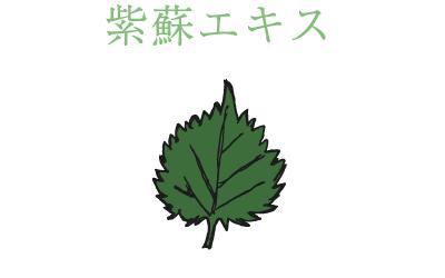 紫蘇エキス