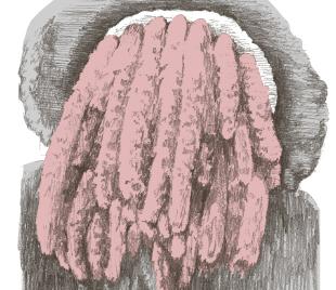 長く棒状「ハンバーグのタネ」に似たものを作る