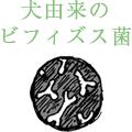犬由来のビフィズス菌