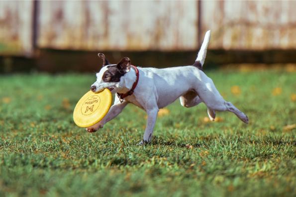 犬の免疫スイッチをオンにする