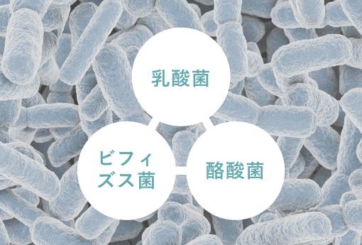 乳酸菌・ビフィズス菌・酪酸菌のシナジー
